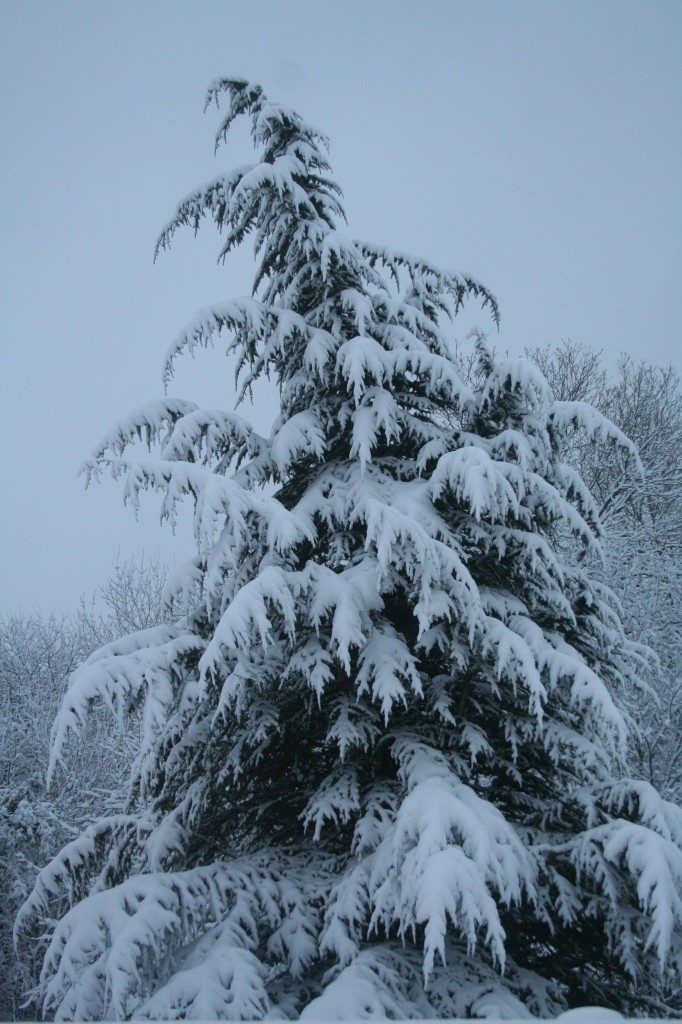 snowtree
