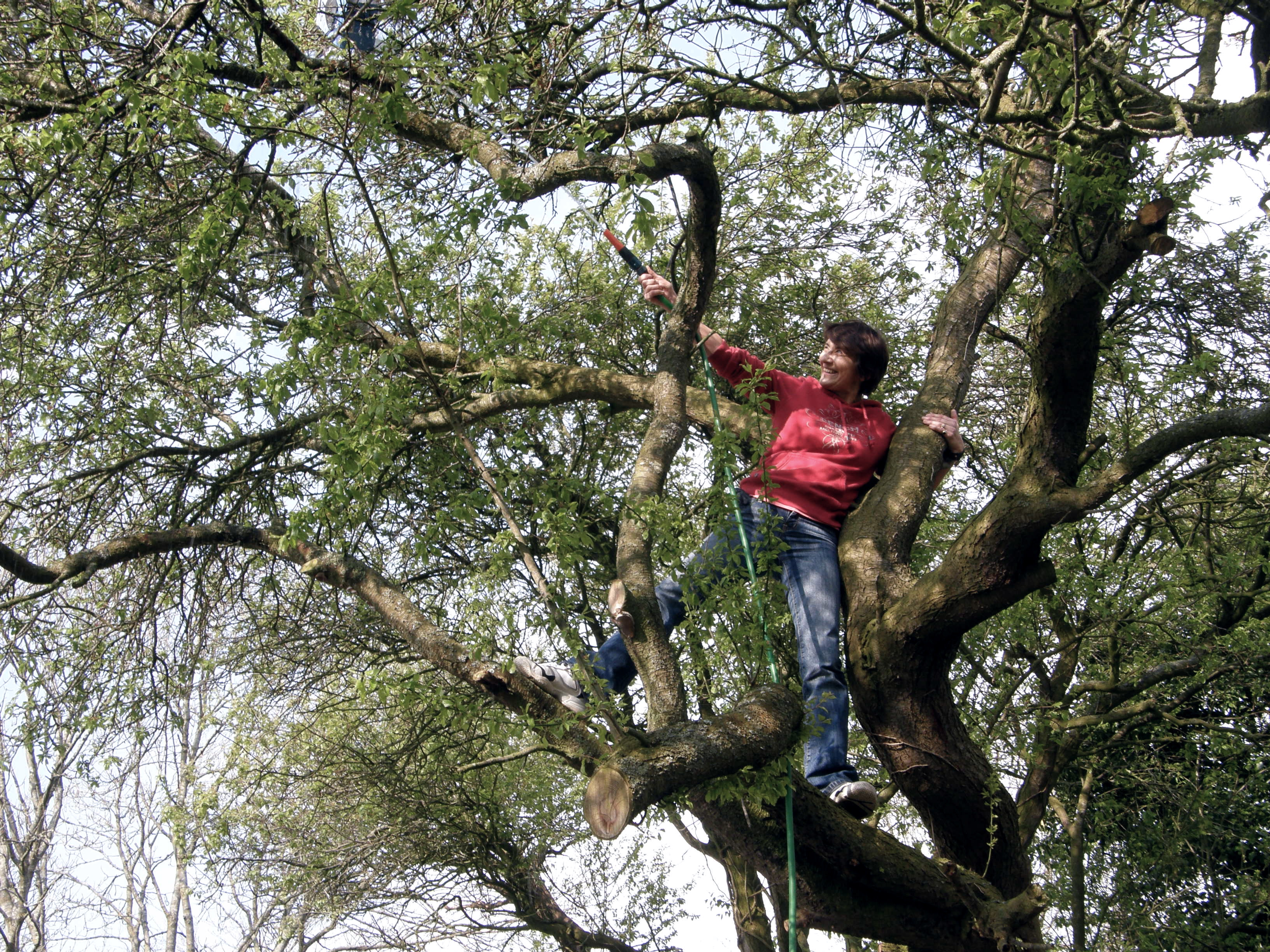 It's my mother. Up a tree - even though she's a woman!