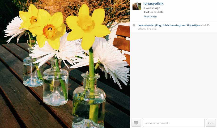 A safe picture of some flowers that I instagrammed, before basking in the glory of 13 heart shaped approvals.